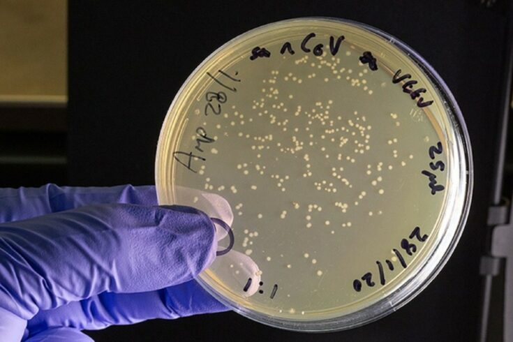 Gloved hand holding a petri dish