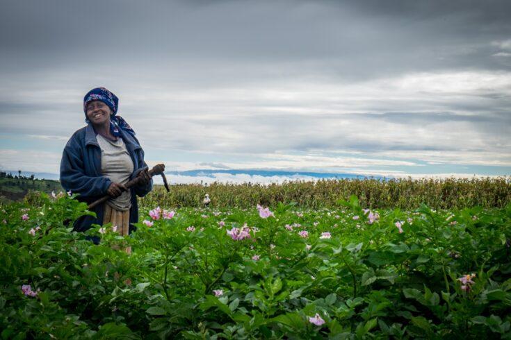 Female potato farmer standing smiling on a potato field in Kenya, Africa