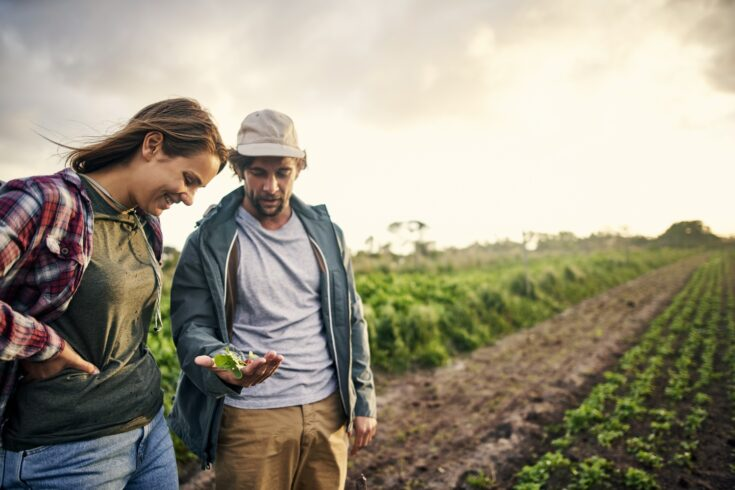 Man and woman picking organically grown vegetables on a farm