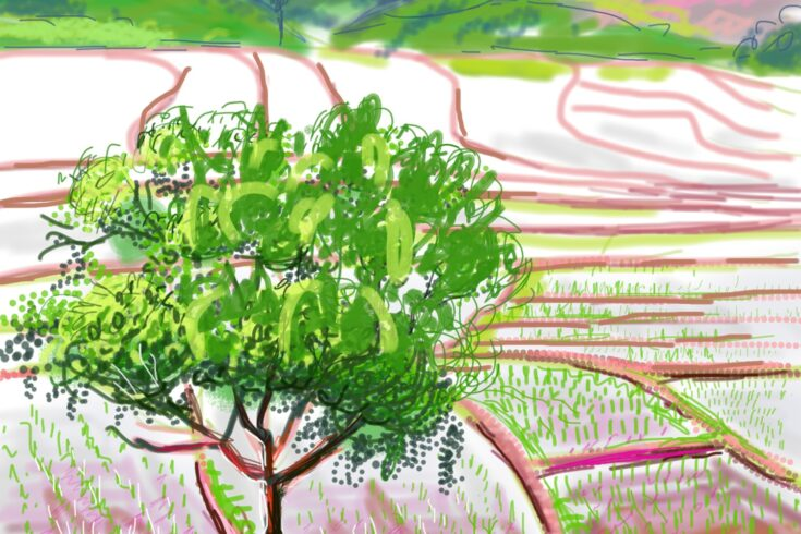 Rice fields - illustration
