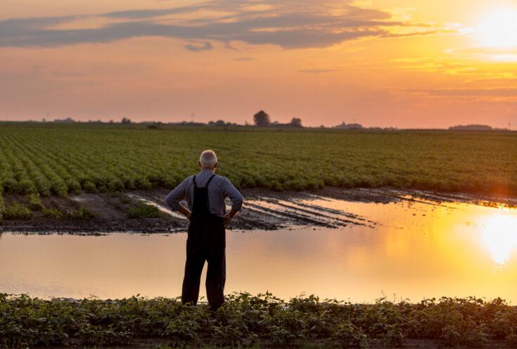 Upset farmer standing beside flooded field