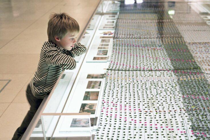 Boy looking at museum exhibit