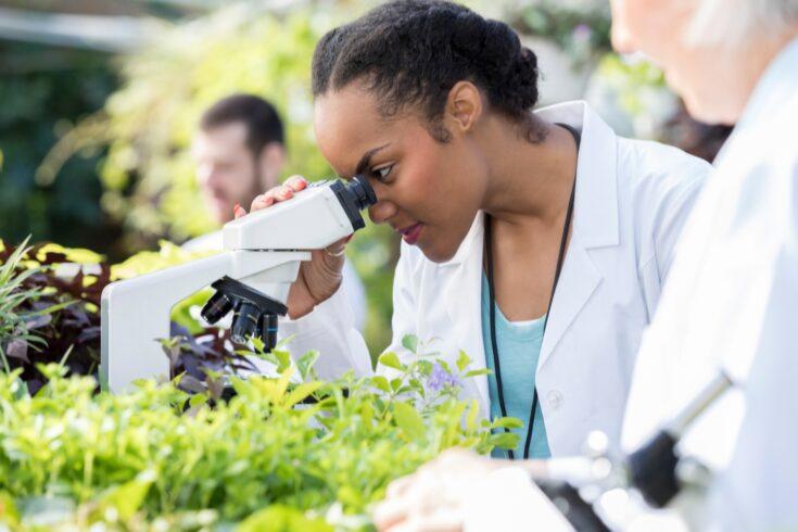 Female botanist uses microscope in greenhouse